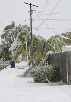 The ice storm in October brought down power lines and snapped tree limbs