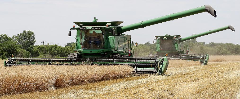 Mike Crowly and Peter Jensen cut wheat in a field